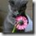 wps_clip_image-28467